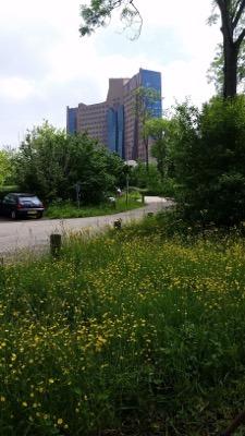 grassen, waaronder helmgras Advies bij aanplant, tuinvrouw Terschelling