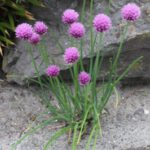 Vaste planten blijven jarenlang de tuin opfleuren en zorgen ervoor dat je het hele jaar door een mooie tuin hebt.