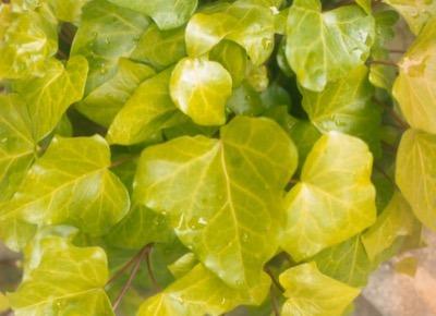 regenwater voor je planten