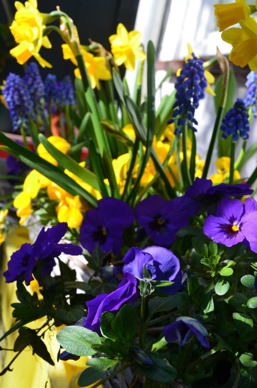 tuinvrouw terschelling adviseert deze bloemen in je tuin