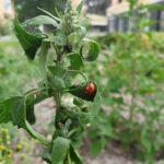 Tuinvrouw Terschelling voor een natuurlijk groene tuin