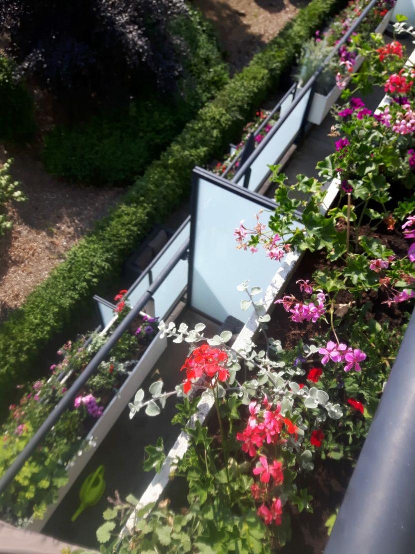 advies over bloemen of planten op je balkon of in je tuin