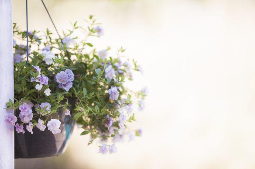 terrasaankleding met bloemen en leuke potten