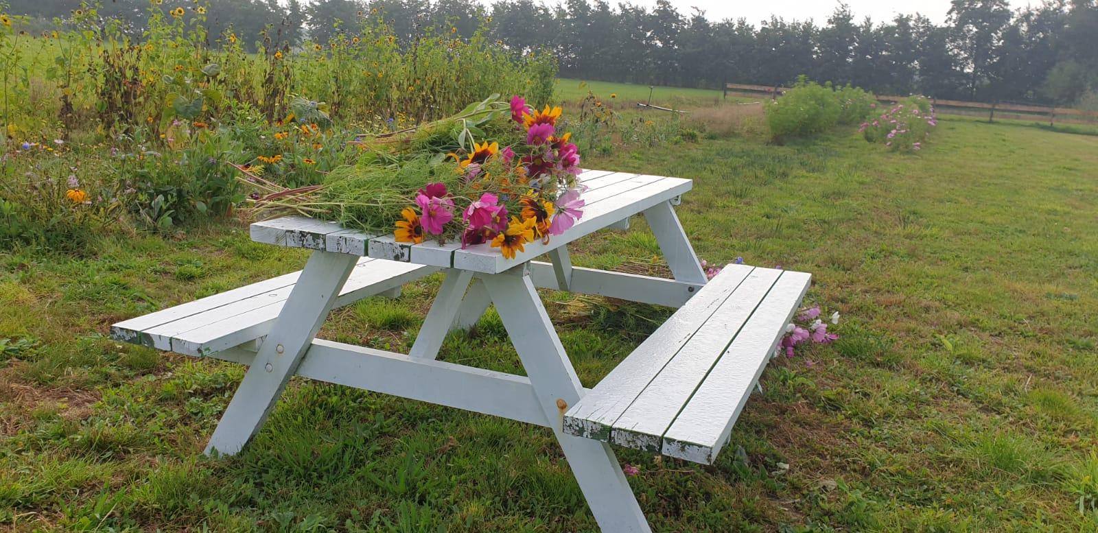 bloemen Terschelling Tuinvrouw tuinbeheer en tuinaanleg